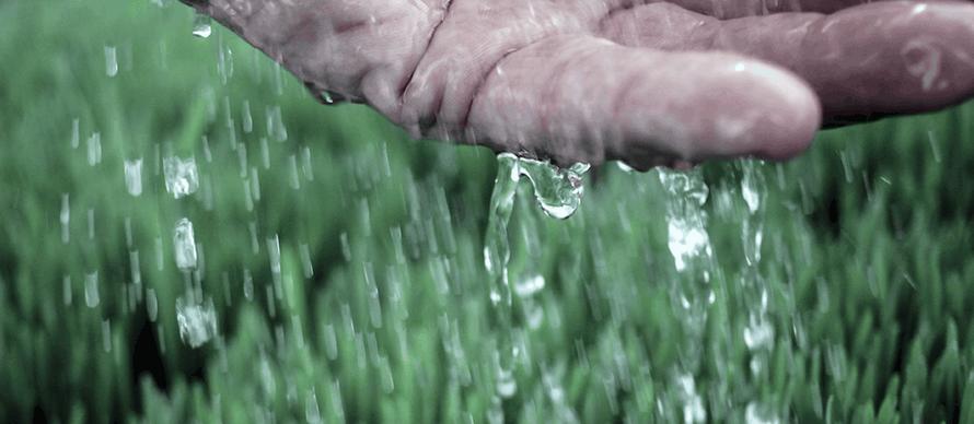 Hand, die Wasser über saftgras laufen lässt
