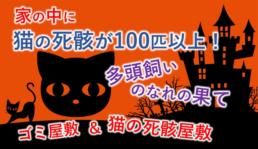 ネコの死骸が100匹以上あった家の話|多頭飼い|猫|死体|片付け|アニマルホーダー|猫屋敷|ゴミ屋敷|多頭飼育崩壊|