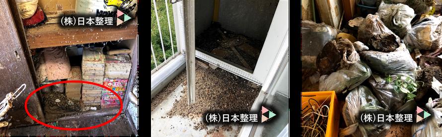 猫|犬|動物|糞尿|排泄物|悪臭|汚染|不衛生|片付け|掃除|クリーニング|臭い|