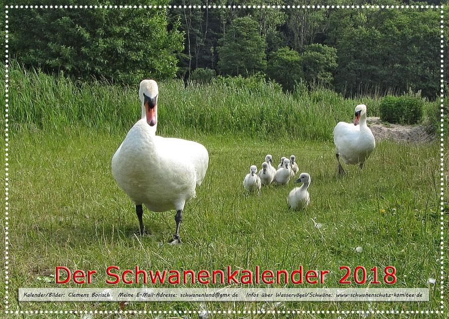 Der neue Schwanenkalender für 2018. Für mehr Infos bitte auf das Bild klicken.