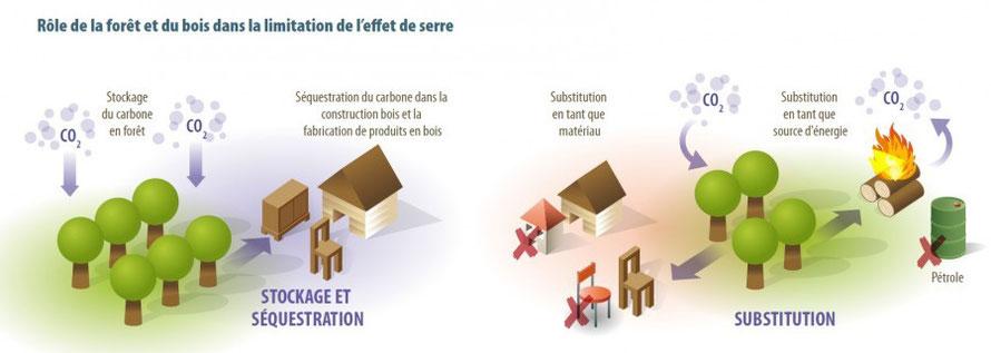 Rôle de la forêt et du bois dans la limitation de l'effet de serre - crédit : Alterre-Bourgogne