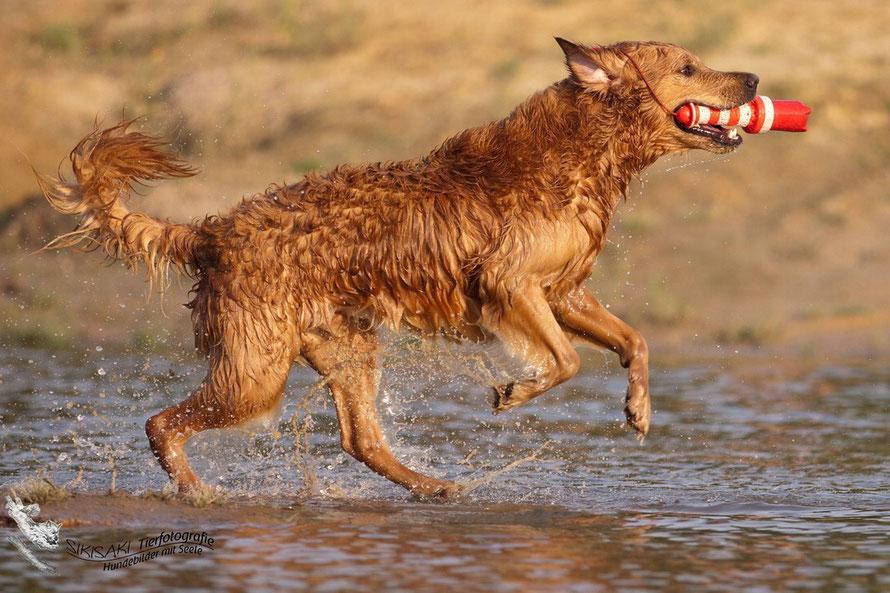 Hund, Tierfotografie, Hundefotografie, Bremen, Oldenburg, Delmenhorst, Ganderkesee, Fotos, Tierfotografin,Hundebilder, Welpenfotos, Welpenbilder, Fotoshooting