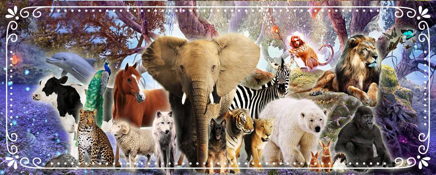 image animaux totem