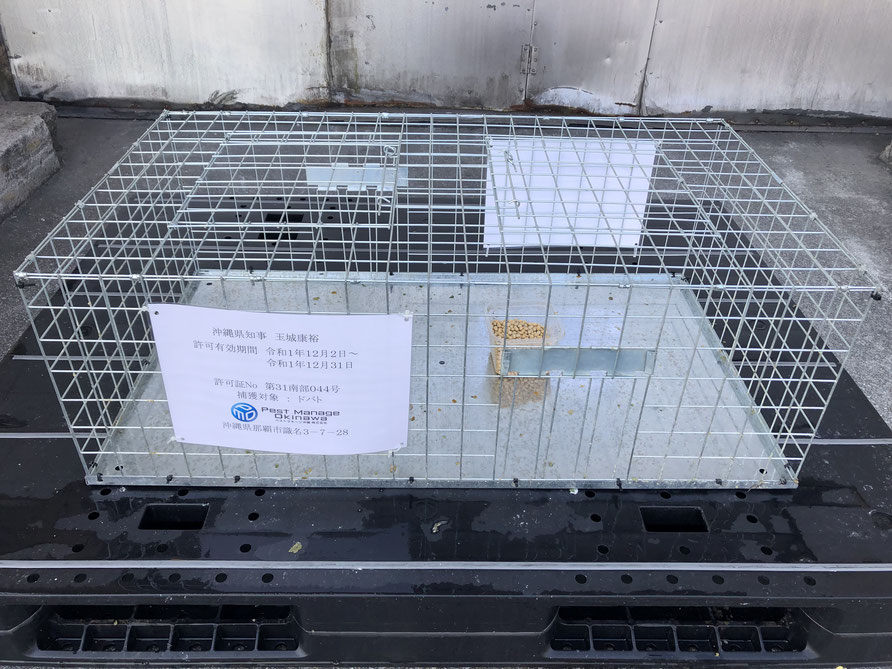 鳩対策での捕獲カゴ