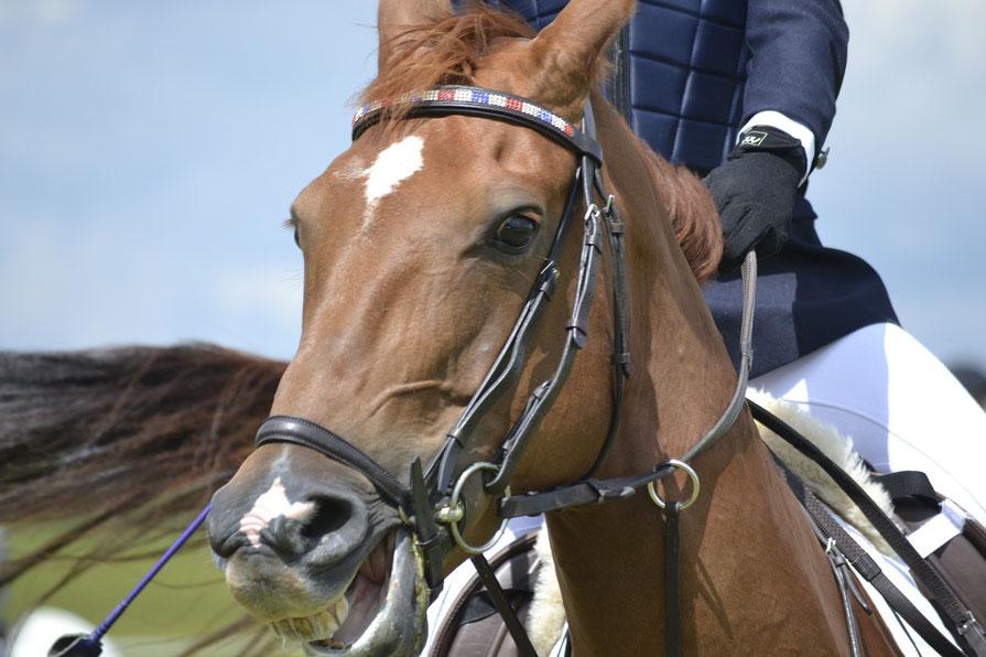 ärztliche Osteopathie bei Reiter und Pferd sinnvoll
