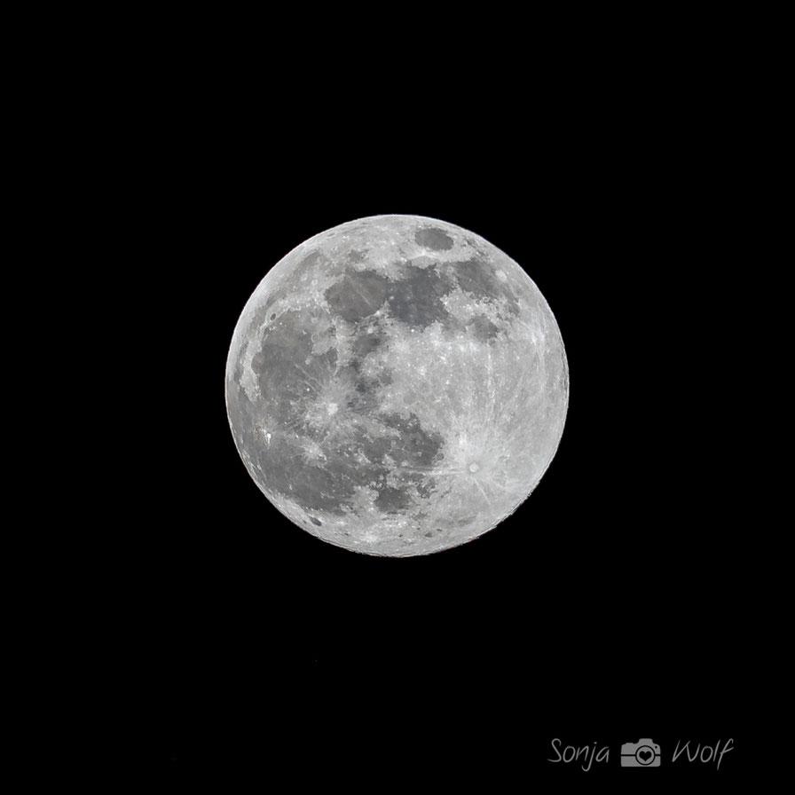 Pink Moon im April. Er ist nicht pink, aber der hellste Supermond des Jahres 2021.