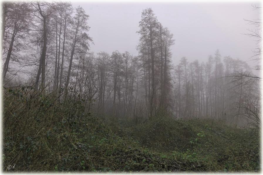 In der Stille des Nebels
