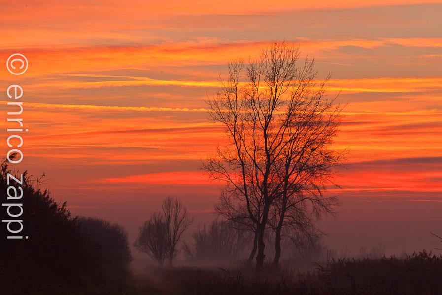 """Valle Mandriole 5/1/2013: oggi è stata una giornata ricca di avvistamenti nelle Valli di Comacchio. Il tramonto si avvicina e dalle condizioni atmosferiche dovrebbe essere di quelli """"buoni""""!!!.  ECCOLO!!! VARIOPINTO COME NON MAI, MERAVIGLIOSO..."""