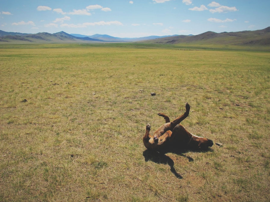bigousteppes mongolie steppes route camion chien