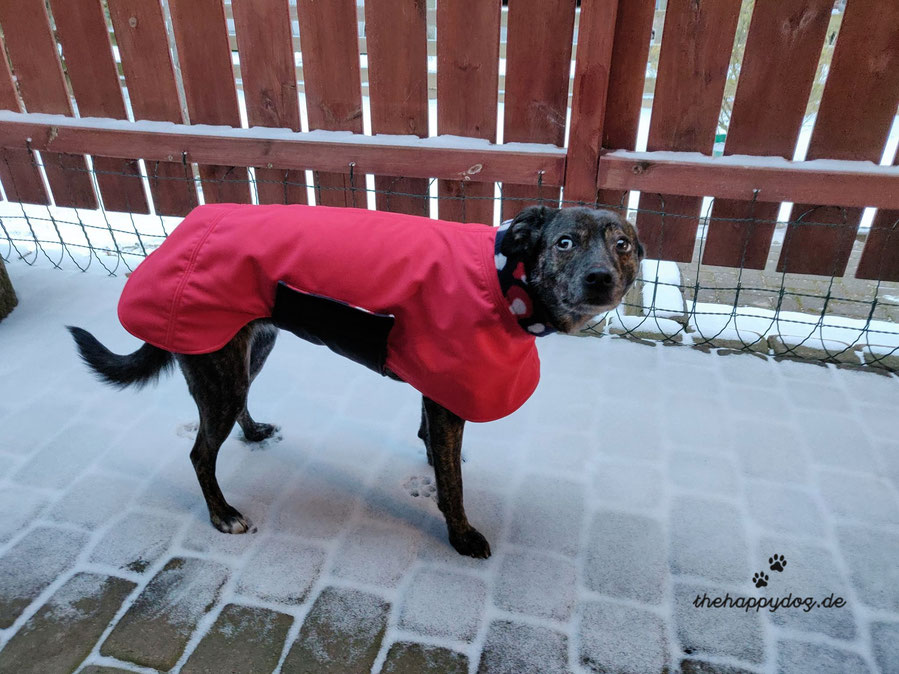 Hundemantel Softshell Maßanfertigung, Wintermantel Hund nach Maß, Softshell-Hundemantel