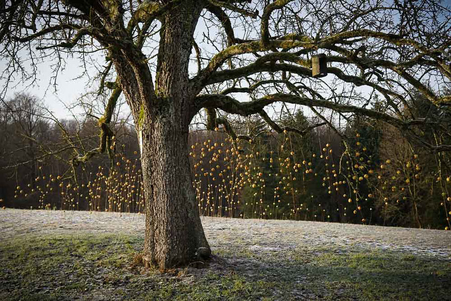 David Klopp | Land Artist | Flying apples