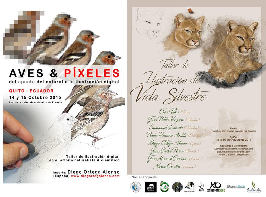 Taller de ilustración científica Ecuador aves & píxeles. Diego Ortega Alonso artista de naturaleza