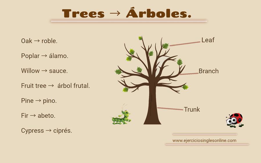 vocabulario árboles en íngles