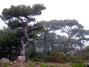 La forêt du Verdus