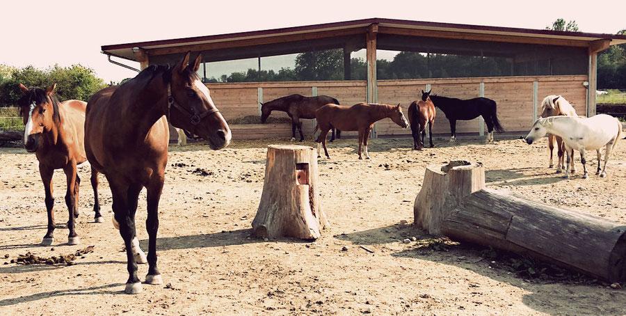 Pferde und Stallgebäude