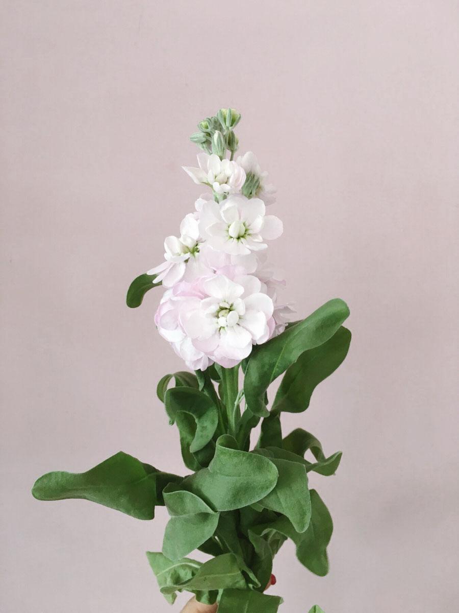 Welche Blumen Gibt Es Im August Hochzeitsfloritik