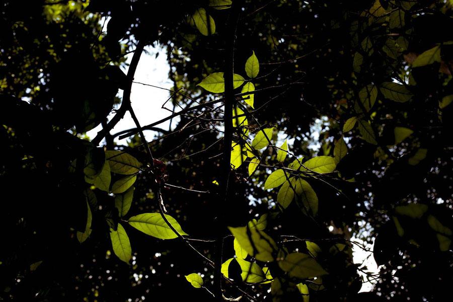 So grün das es weh tut, Laos