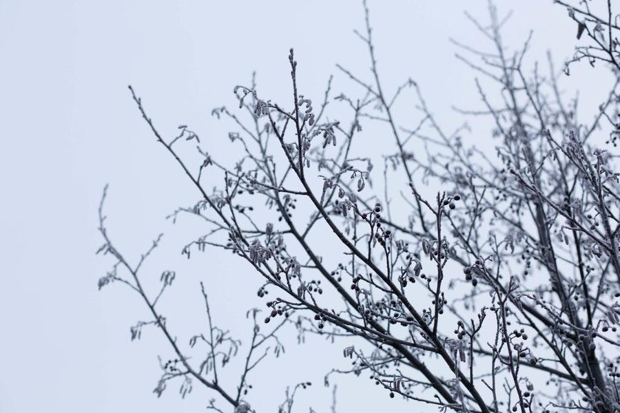 Eisblumen ohne Ende. Seutula, Vantaa, Finnland.