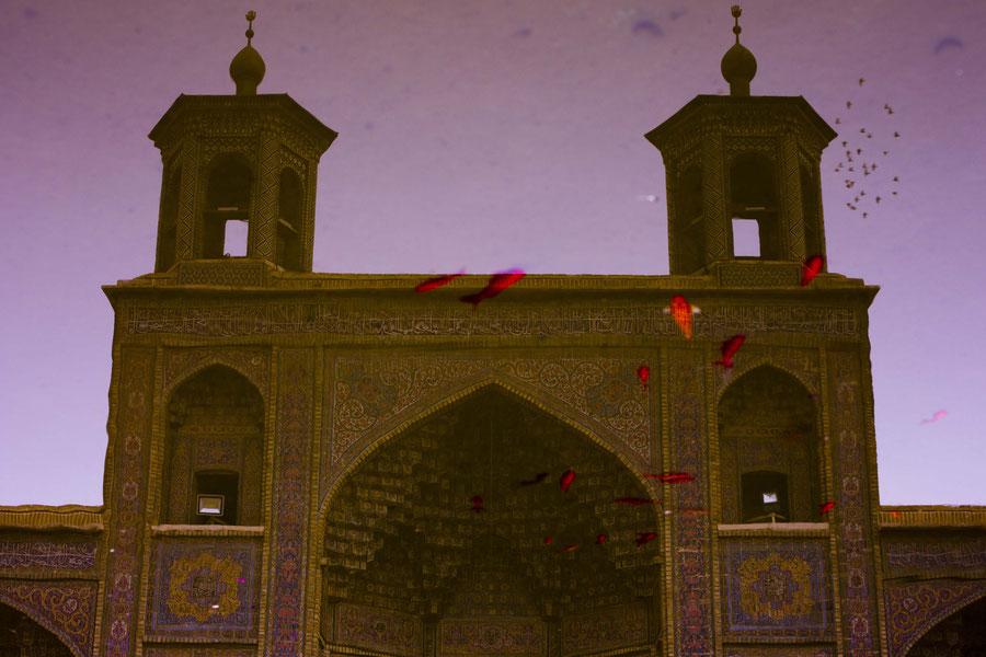 Die Pinke Moschee im Spiegelbild mit Goldfischen, Shiraz, Iran