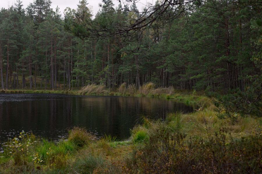 Sumpf und See, Lettland