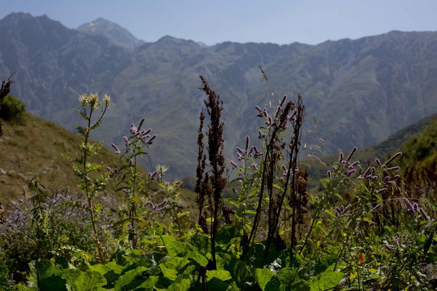 Blumenvielfalt auf 2.000 Metern, Kazbegi, Georgien