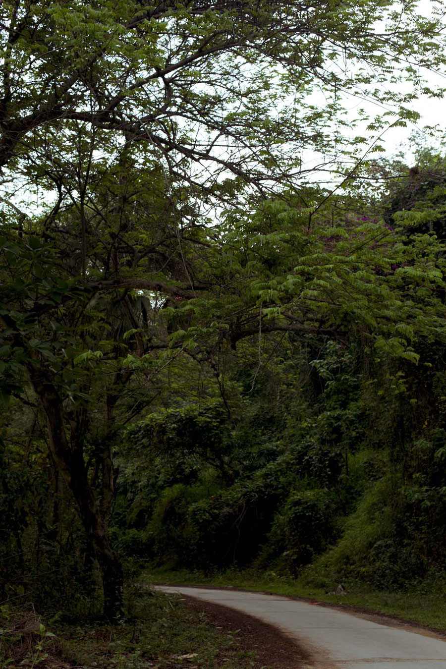 Higher into mountains means higher into the woods, Jinghong, China