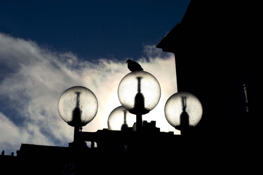 Lampe und Vogel im Licht, Stockholm, Schweden