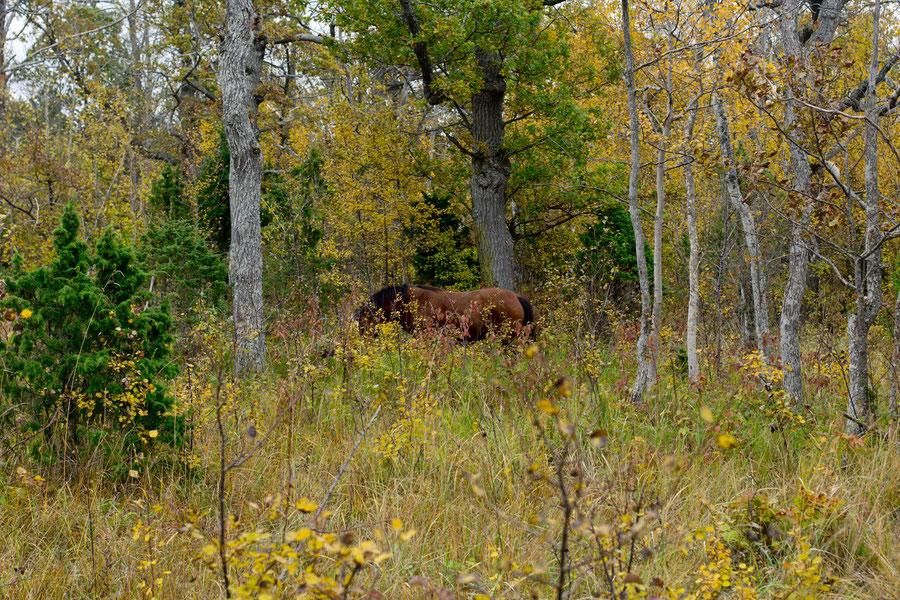 Eine Weide im Wald. Die schönste Art Tiere zu halten.