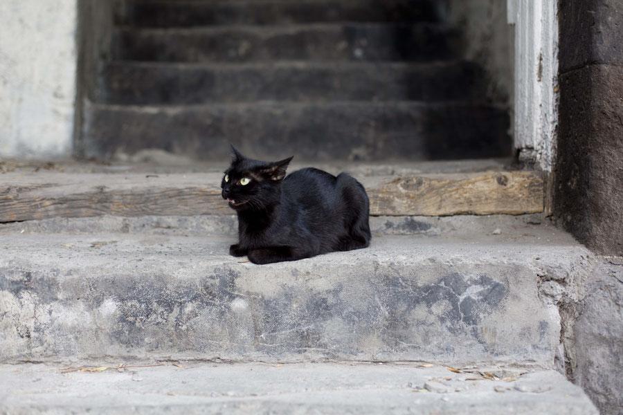 Vorsicht wütende Katze, Yerewan, Armenien