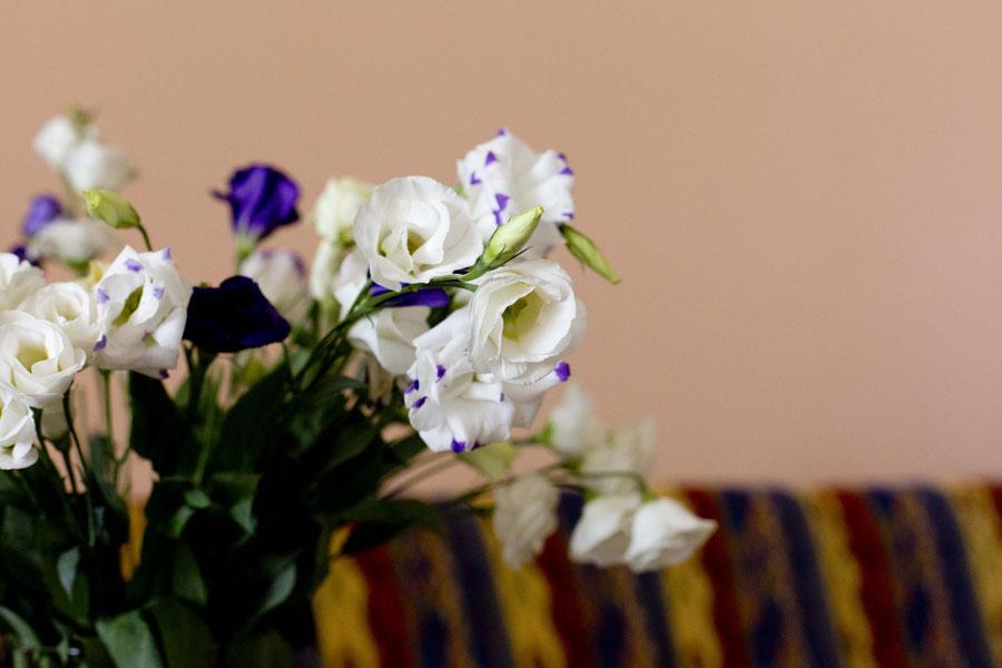 Geburtstagsblumen, Jerewan, Armenien