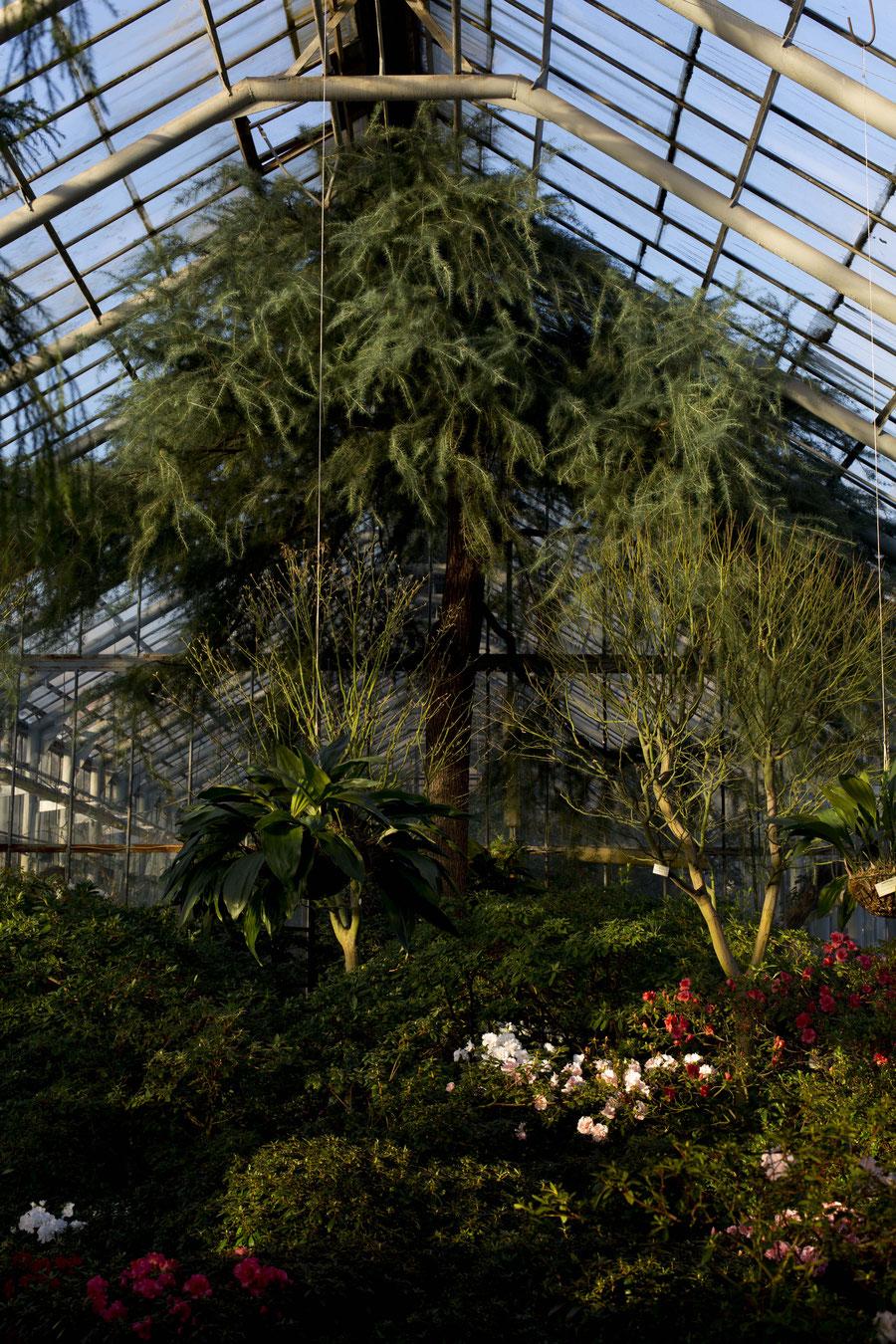 Die Ebenen beim Spiel mit Blumen und Glas, Botanischer Garten, Sankt Petersburg
