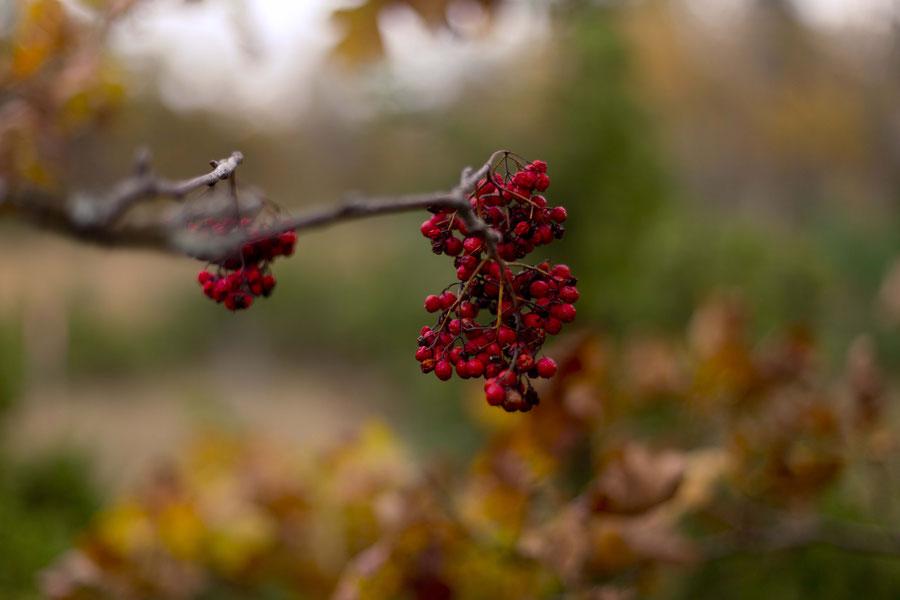 Those red berries that I see everywhere. Estonia