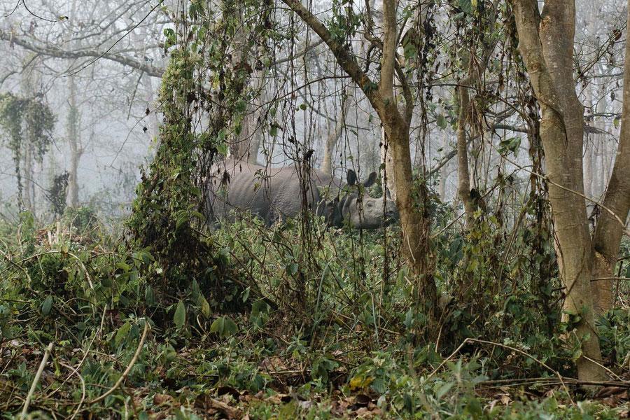 Im Auge des Riesen,  Chitwan National Park, Nepal