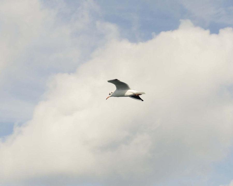Eine fliegende Möwe vor Wolken.