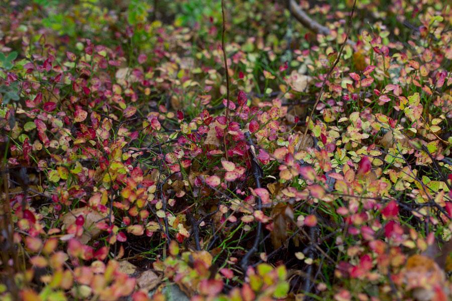 reales Bullerbü, Svartsö, Schweden