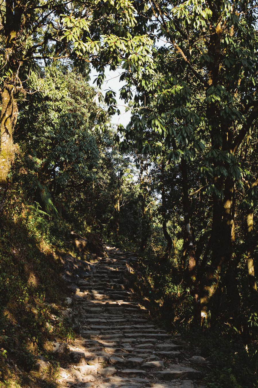 Treppenstufen, Mardi Himal Trek, Nepal