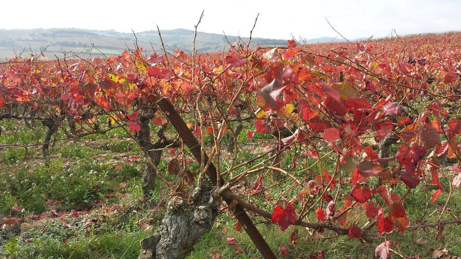 La région viticole dans laquelle se trouve notre maison d'hôtes près de Limoux