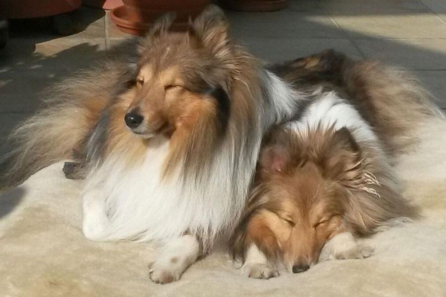 Balou und Betty genießen die ersten warmen Sonnenstrahlen.
