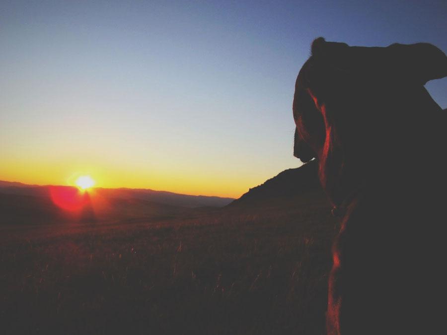 bigousteppes mongolie steppes montagne lever du soleil aurore chien ciel