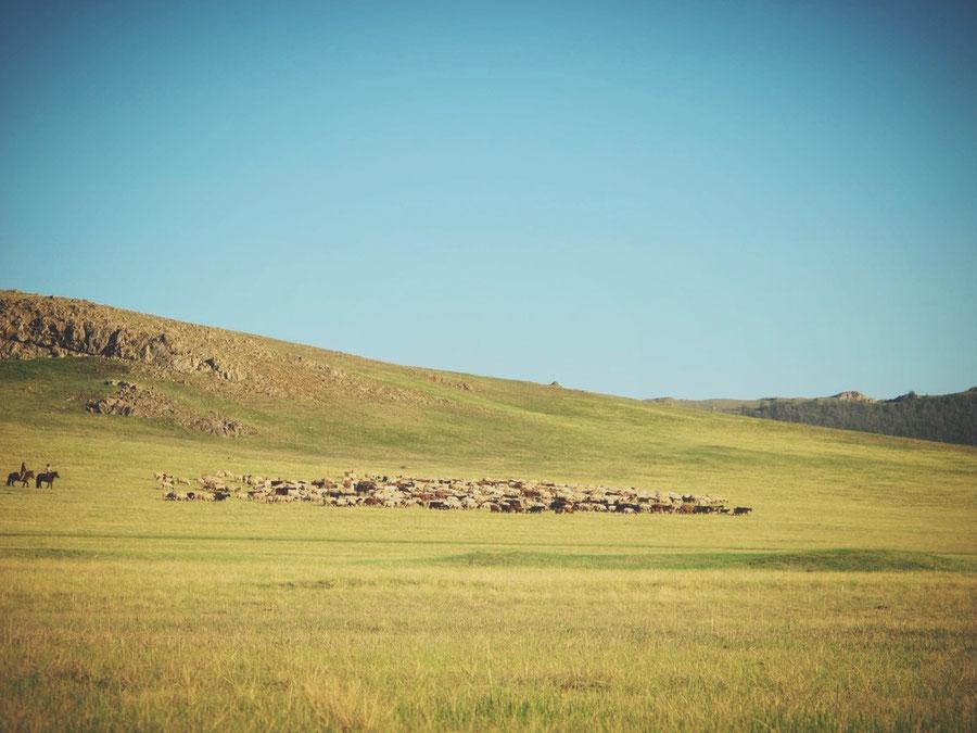 bigousteppes mongolie steppes troupeau eleveur nomade camion