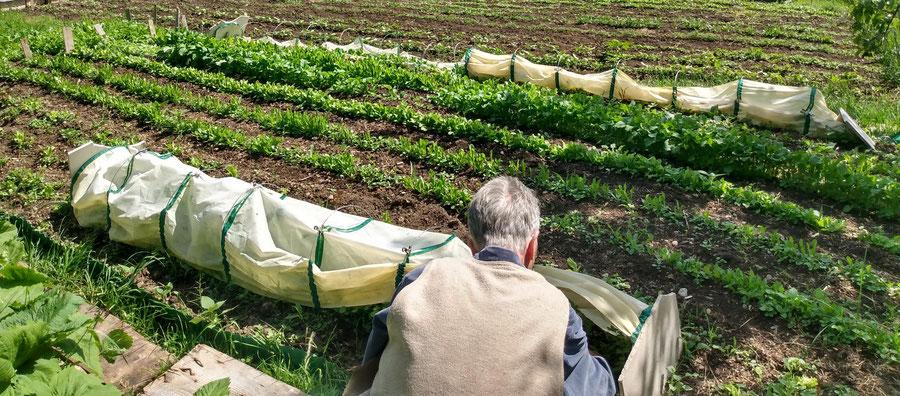 Foto Projekte von United Nature zu den Themen: biologischer Gartenbau, Naturmeditation, Gartentherapie, Klima Änderung, spirituelle Landwirtschaft, Edelsteielixiere, Blütenessenzen, Sufismus und Mystik an
