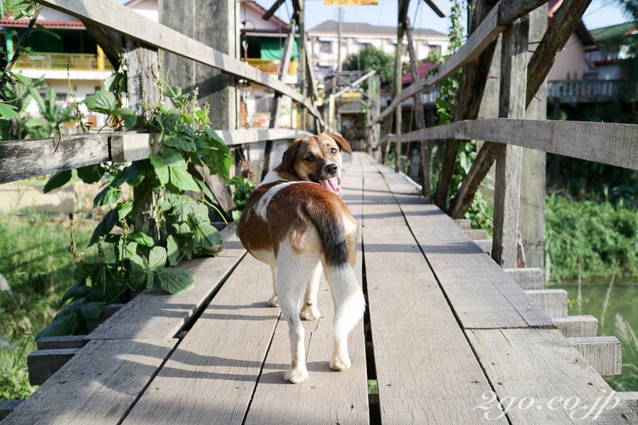 橋ですれ違った犬に微笑まれた。