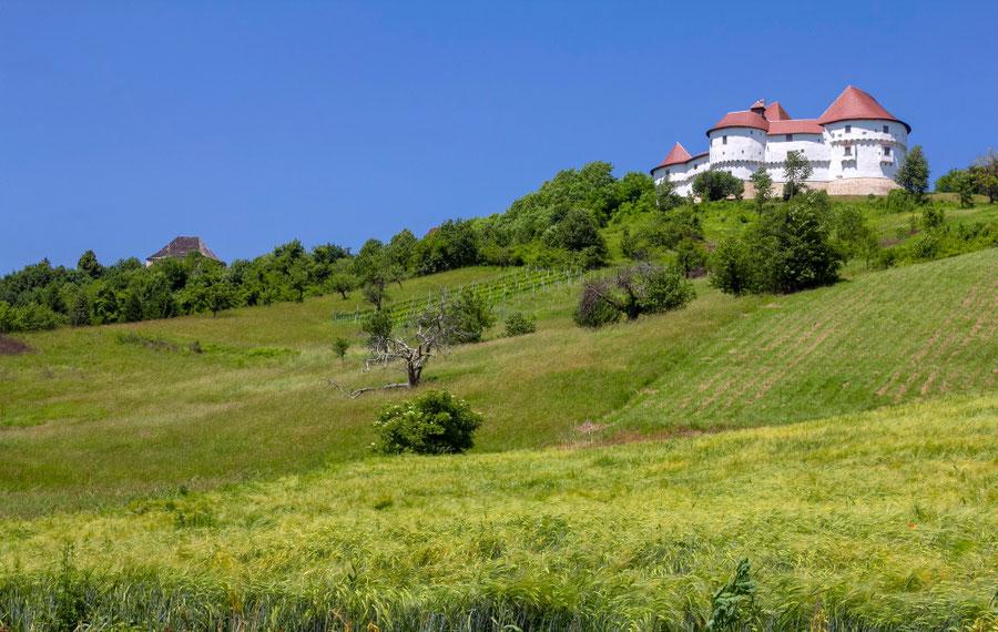 Veliki Taboro pilis Kroatijos Zagoreje apsupta vynuogynų