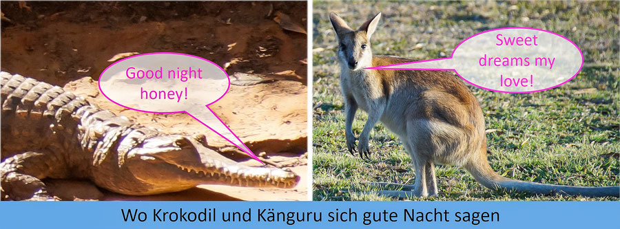Reisebericht Australien Intro, Krokdil, Känguru