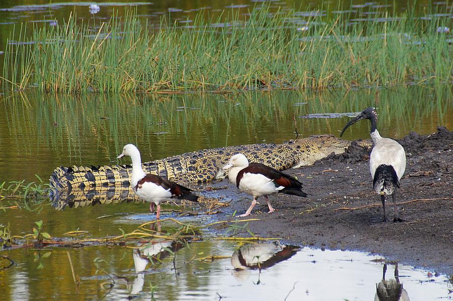Australiens Attraktinen, Kakadu Nationalpark
