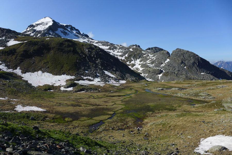 Riedbock - Feuchtwiesen der Riekener Hochalm - Bergtour, Reißeckgruppe, Mölltal, Kärnten