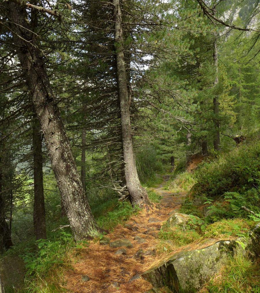 Gelttalalm - Wanderung, Gelltal, Rieserfernerhütte - Waldsteig aus dem Reiner Tal