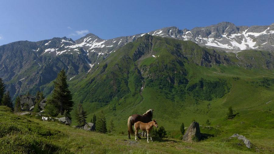 Vorderer Geiselkopf - Bergtour, Nordostgrat, Hagener Hütte - oberes Mallnitzer Tauerntal