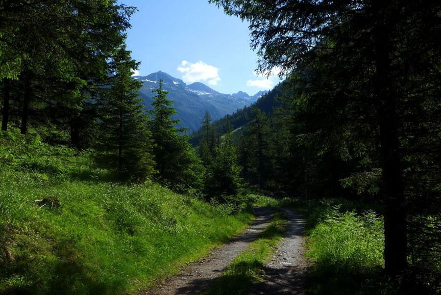 Kaponigtal - Waldweg - Wanderung, Reißeckgruppe, Mölltal, Kärnten
