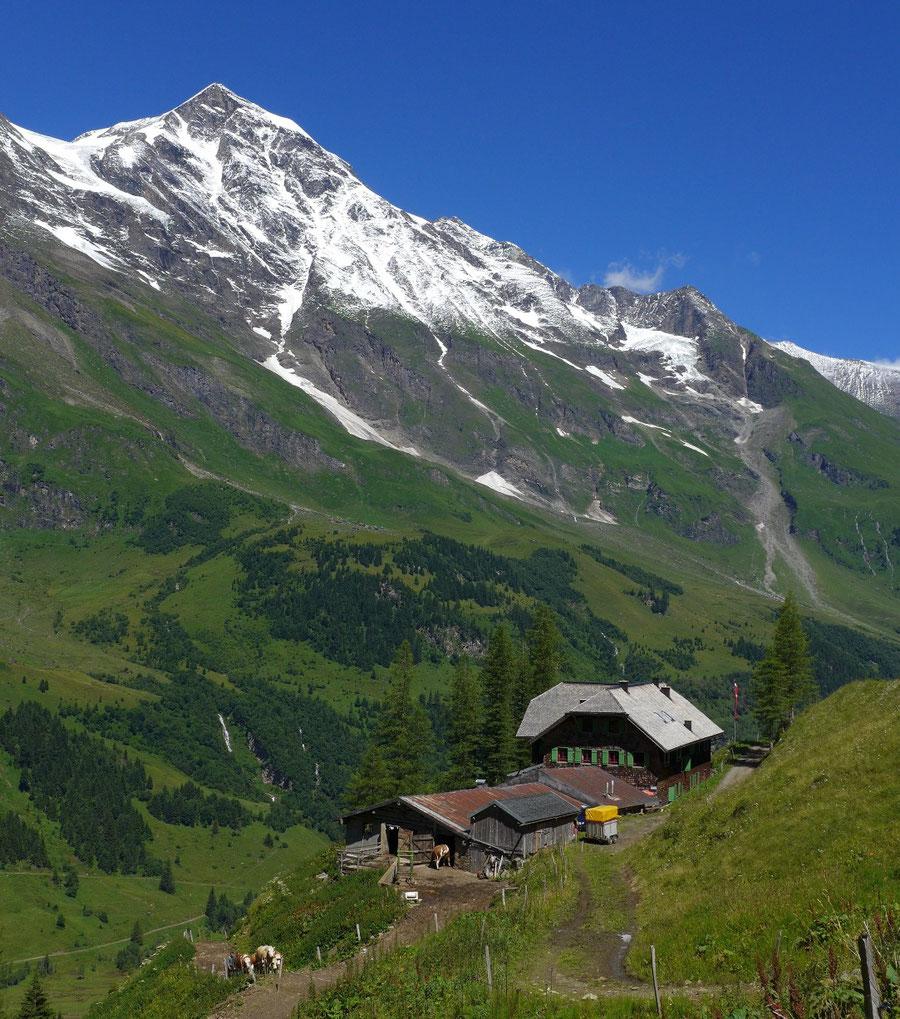 JWD Bergtouren Käfertal & Trauneralm Blick zum Großen Wiesbachhorn